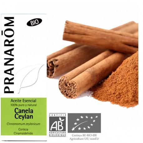 cinnamomum verum o cinnamomum zeylanicum
