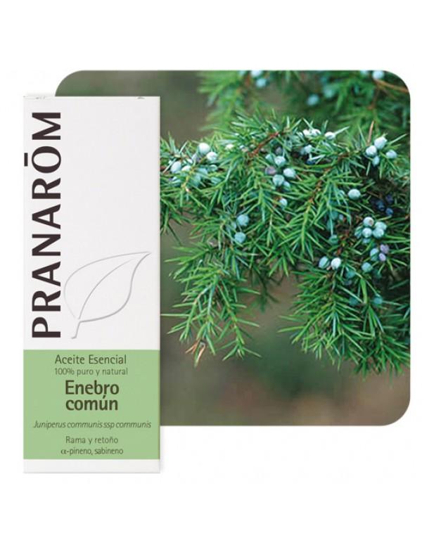juniperus comunes ssp comunes