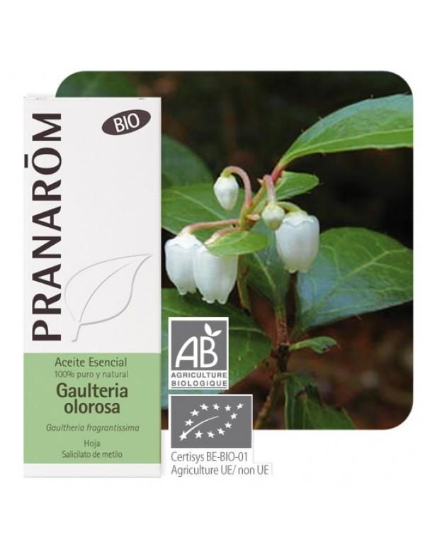 gaultheria fragrrantissima