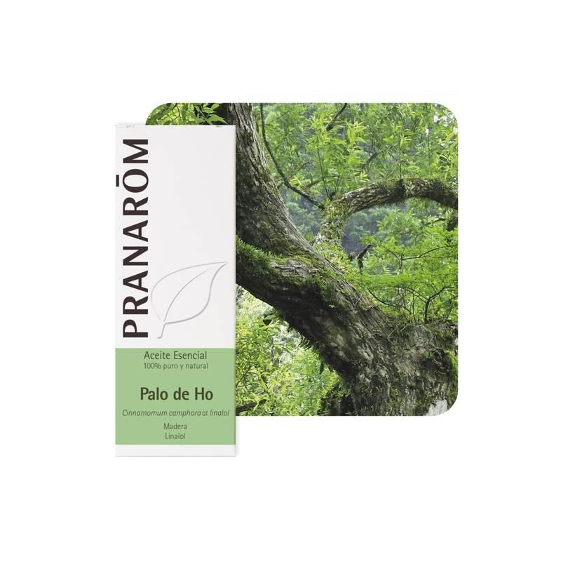 Cinnamomum camphora QT linalol