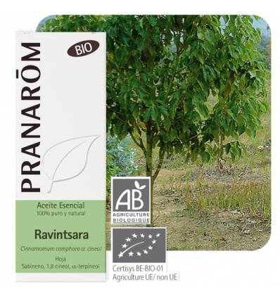Cinnamomum camphora QT cineol